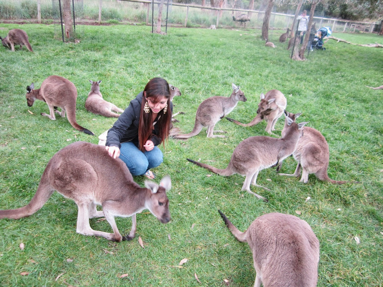 personal with Kangaroos